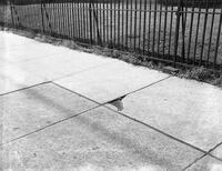 15th Avenue School Cracked Walk Repair Maintenance Department Mr. David Seiden